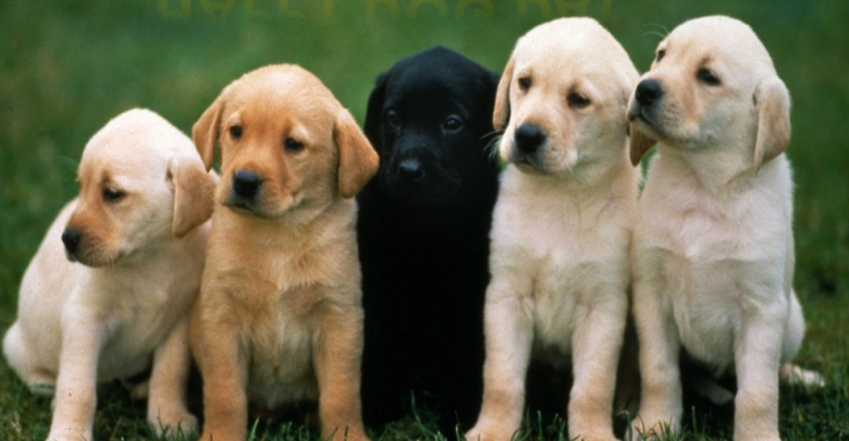National Dog Day quotes, images and Picture