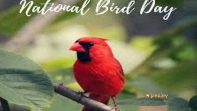 National Birds Day Wishes, Messages, Greeting, Status, Quotes and Images